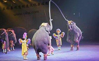 浅谈中国马戏发展图片